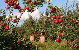 Creare un frutteto