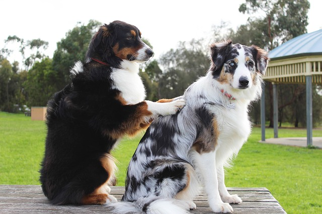 Fare business come operatore di pet therapy