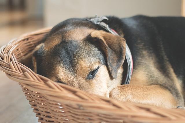 Come fare business con una pensione per animali